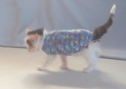 Cat In A Sweater Mrs. Dillon 2016-08-13