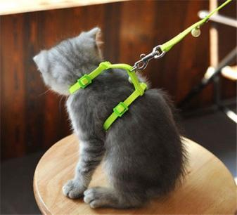 too loose cat harness training